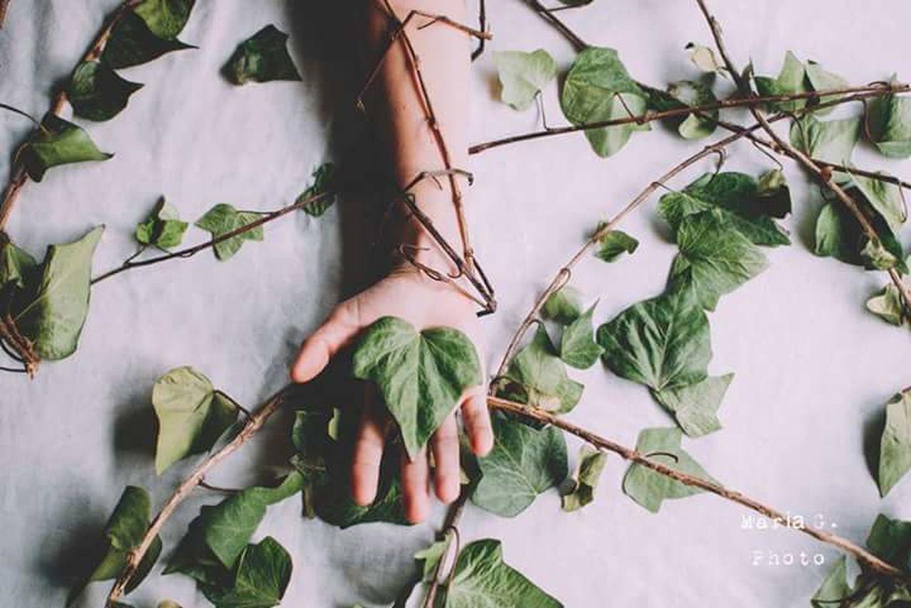 I don't forget them. Mis raíces. Plant Leaf Social Issues Agriculture Beauty 35mm Tree Raíces Missingthemsomuch Green Handportrait Sensitive Sensitive Photo