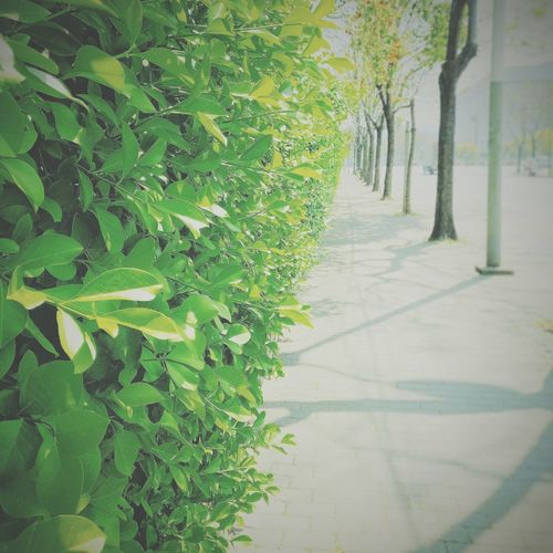 Miss the sunny days Green Color Grass Growth Shadow Day Nature Outdoors Tree No People Beauty In Nature
