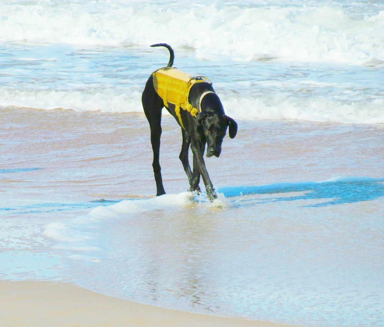 Sea Pets Beach One Animal Water Dog Domestic Animals Outdoors Mammal Nature No People Day Animal Themes Sky Dog On Beach Dog On The Beach Sand