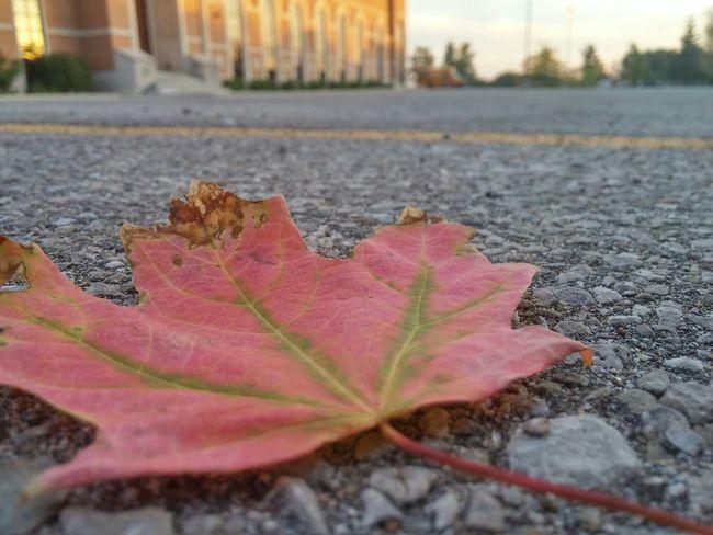Fall Autmn Colors Leaf