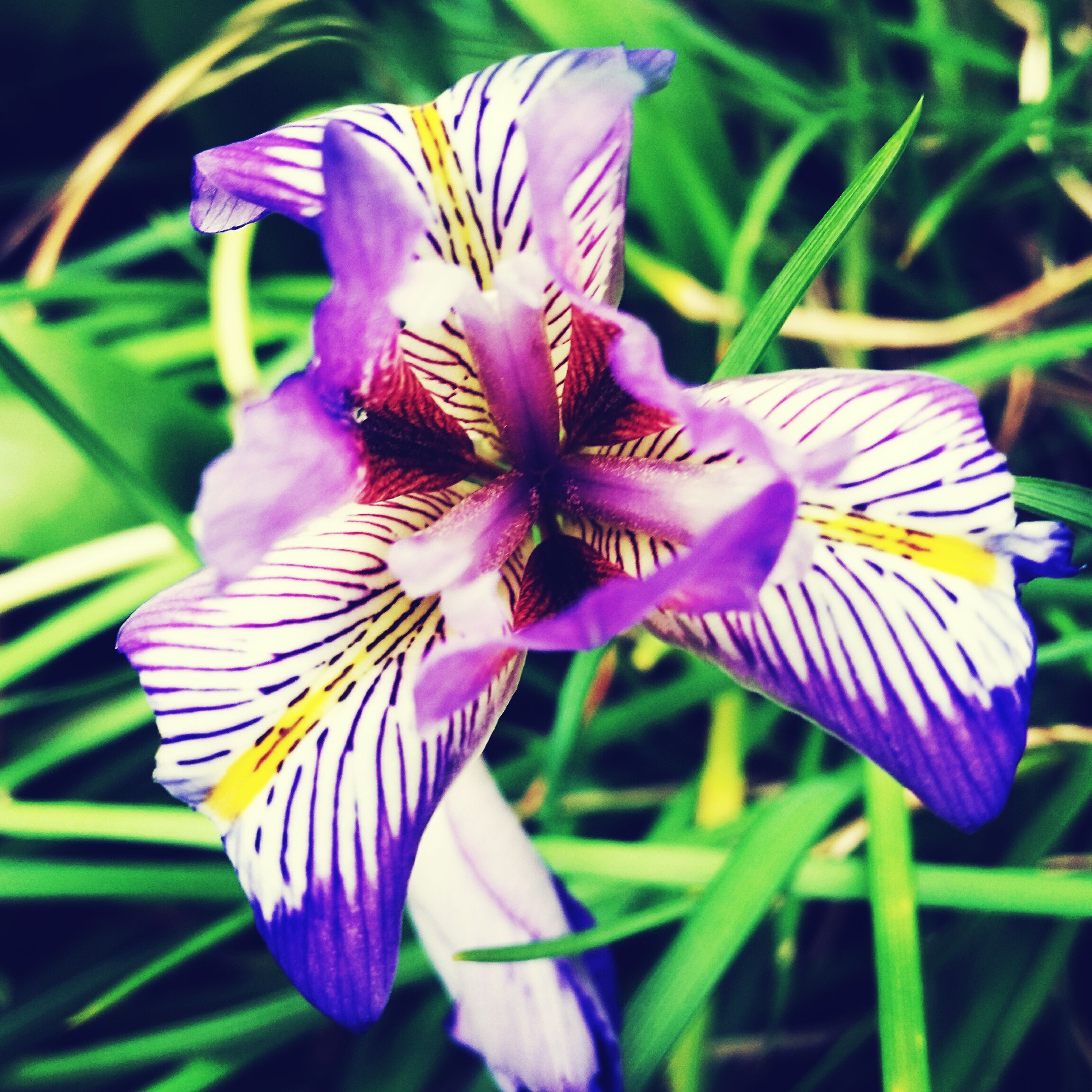 flower, petal, freshness, fragility, flower head, purple, growth, beauty in nature, close-up, nature, blooming, focus on foreground, pollen, plant, stamen, in bloom, blossom, stem, single flower, botany