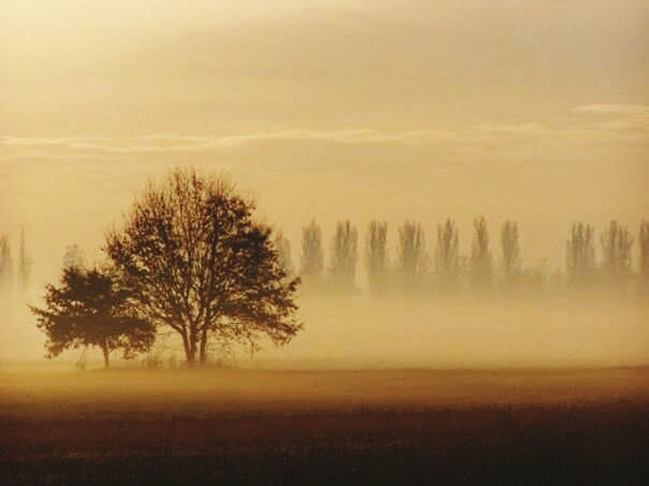 tree, nature, beauty in nature, landscape, tranquil scene, scenics, tranquility, no people, outdoors, forest, sunset, sky, day