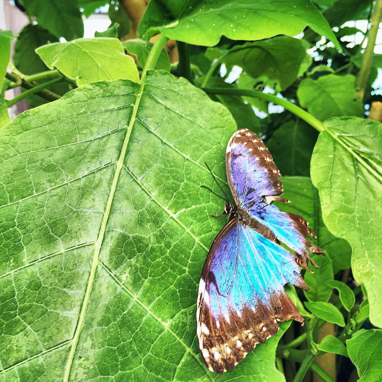 Check This Out Taking Photos Enjoying Life Butterfly