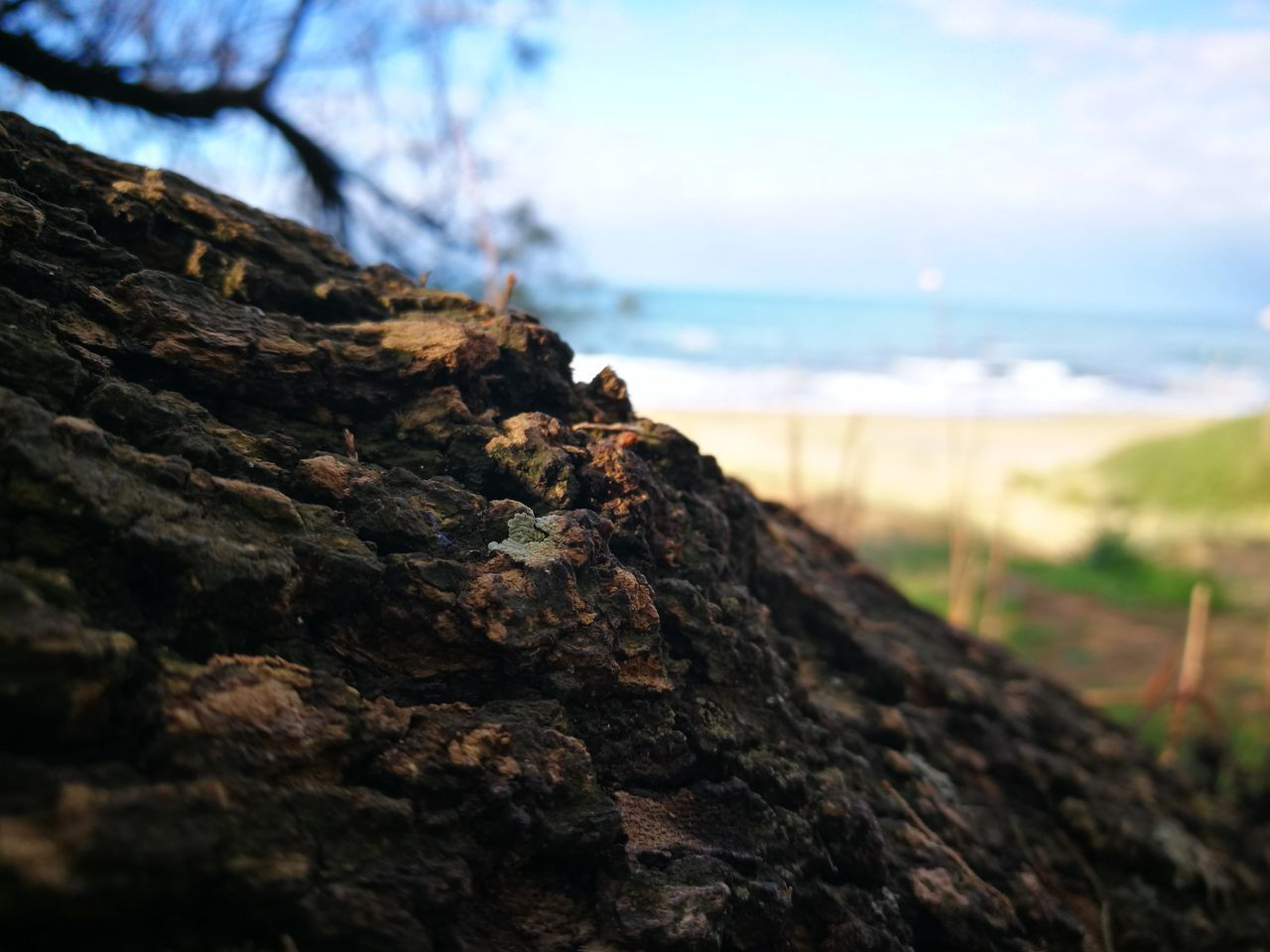 nature, rough, focus on foreground, rock - object, no people, tree, tree trunk, textured, day, moss, beauty in nature, outdoors, close-up, lichen, sky, sea