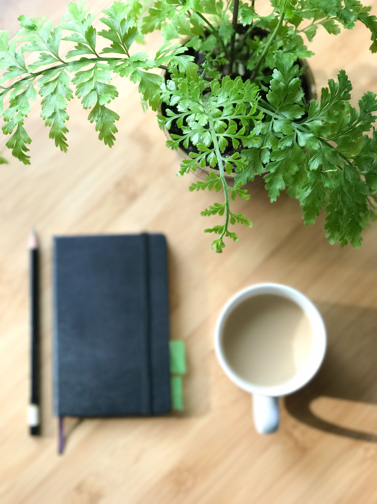 Coffee - Drink Coffee Cup Cup Day Drink Early Morning Light Fern High Angle View Indoors  Journal Mug No People Notebook At Work Plant Refreshment Table Top Down View Wood - Material Writing Instrument