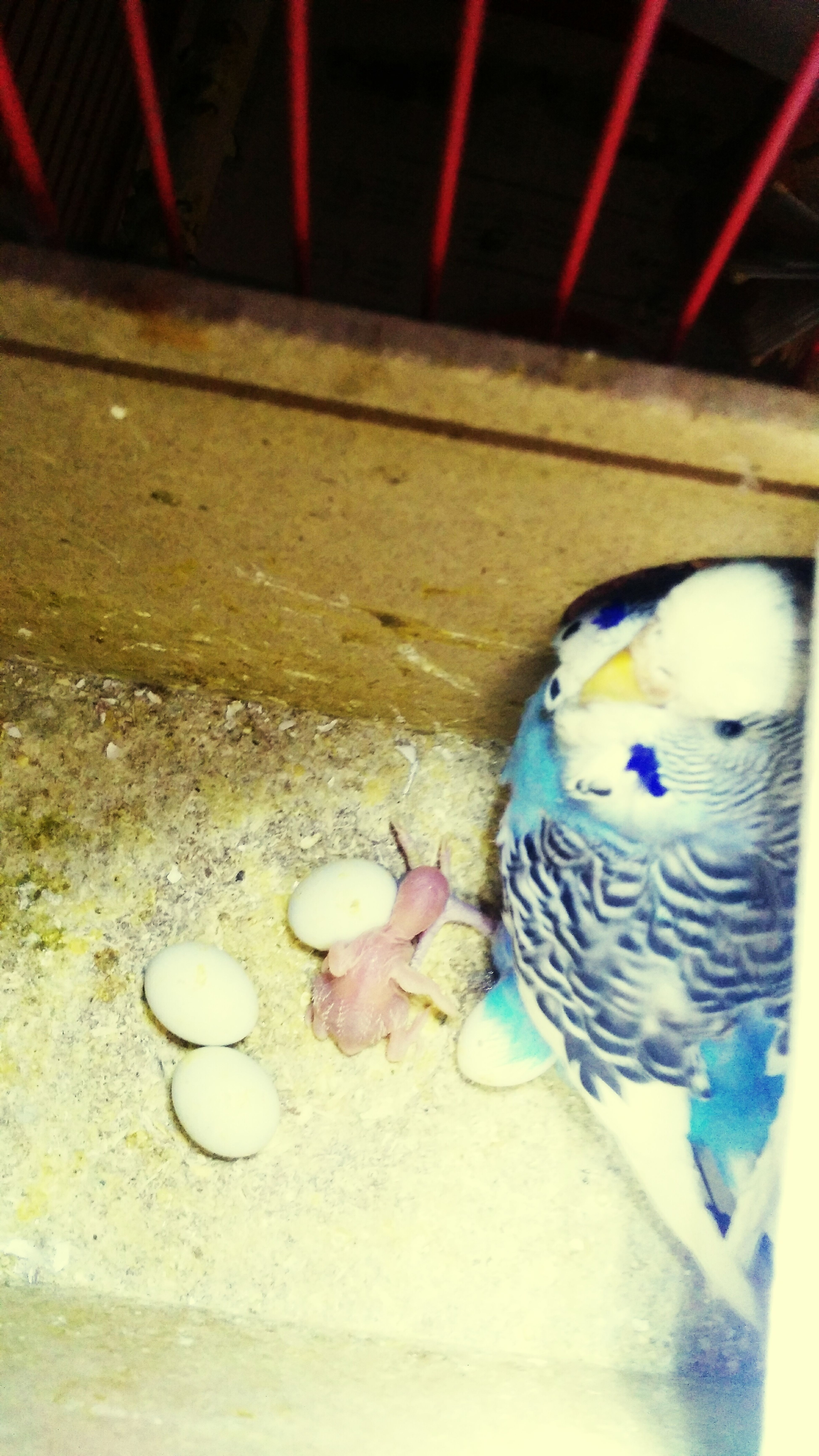 Baby bird 🐥💜 🐥💜🐣 Heyecan Aileninyeniüyesi Minikayaz Minikyumurtalar