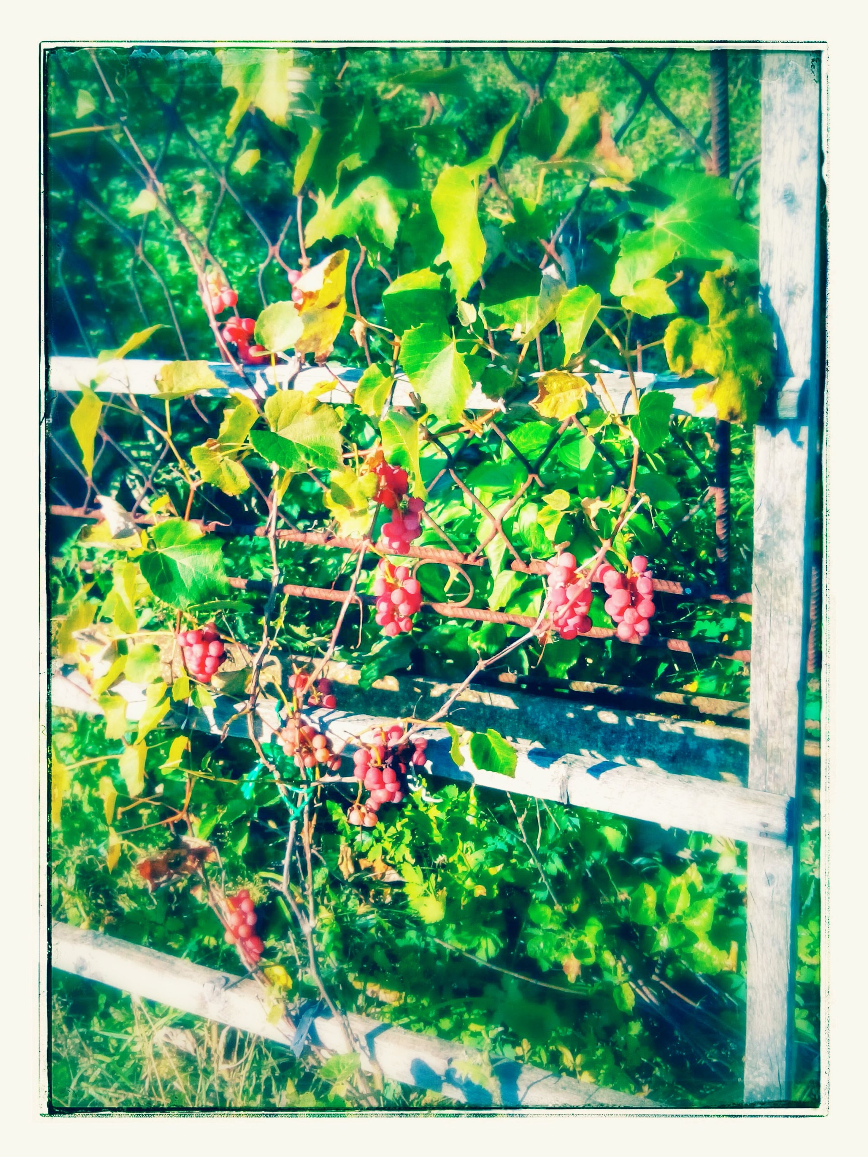 transfer print, growth, flower, auto post production filter, plant, nature, freshness, tree, leaf, fence, beauty in nature, branch, green color, day, outdoors, growing, no people, fragility, stem, front or back yard