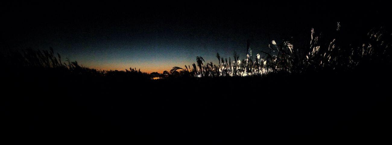 Silvergrass Night Taking Photos Sky beautiful☺️