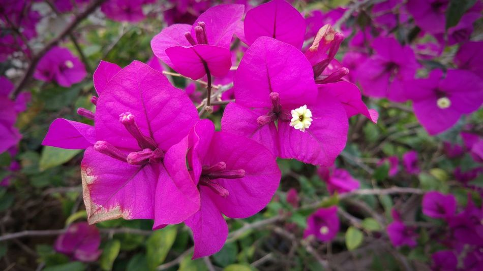 Flower Nature Beauty In Nature Freshness Fragility Petal Flower Head No People Day Outdoors MIphotography Morning
