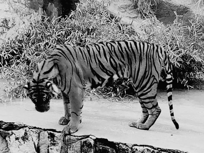 Hanging Out Rainy Day Zoophotography Relaxing Check This Out Taking Photos Wildanimal Enjoying Life Taking Photos Wildlife & Nature Walking Around Check This Out Zoology Animals Black And White Collection  Blackandwhite Photography Black&white Youve Gotta Be Kidding Me! Togetherness Hello World Cheese! Hi! Rainy Days Quality Time Unicorn