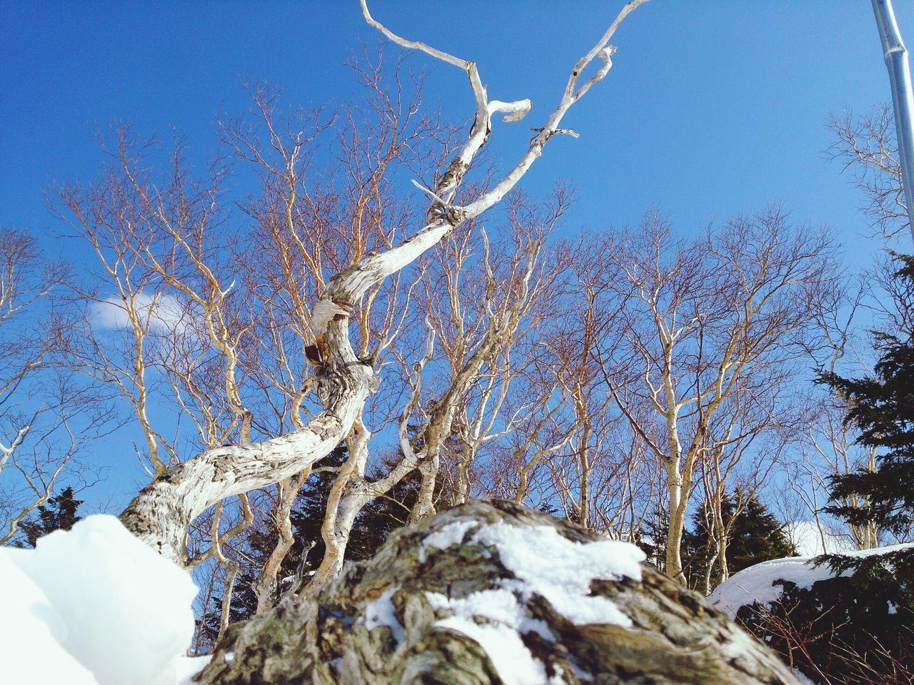 Snow Trees Snow Tree