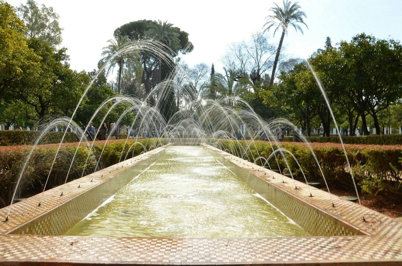 Flower Plant Green Color Parque De Maria Luisa Seville Sevilla Beauty In Nature Outdoors Nature
