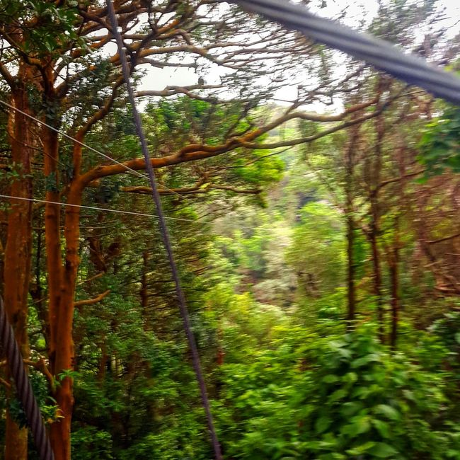 Travel The World Zipline Ziplining Costa Rica Gogreen Travelwithme Travelagent Wonderful_places Travel Photography Feel The Journey Adventure Lifestyle Forest Forestphotography Live Zoom Zoomthelife