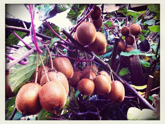 Kiwis at Plotzers Hüttchen by Ralph Kühnl