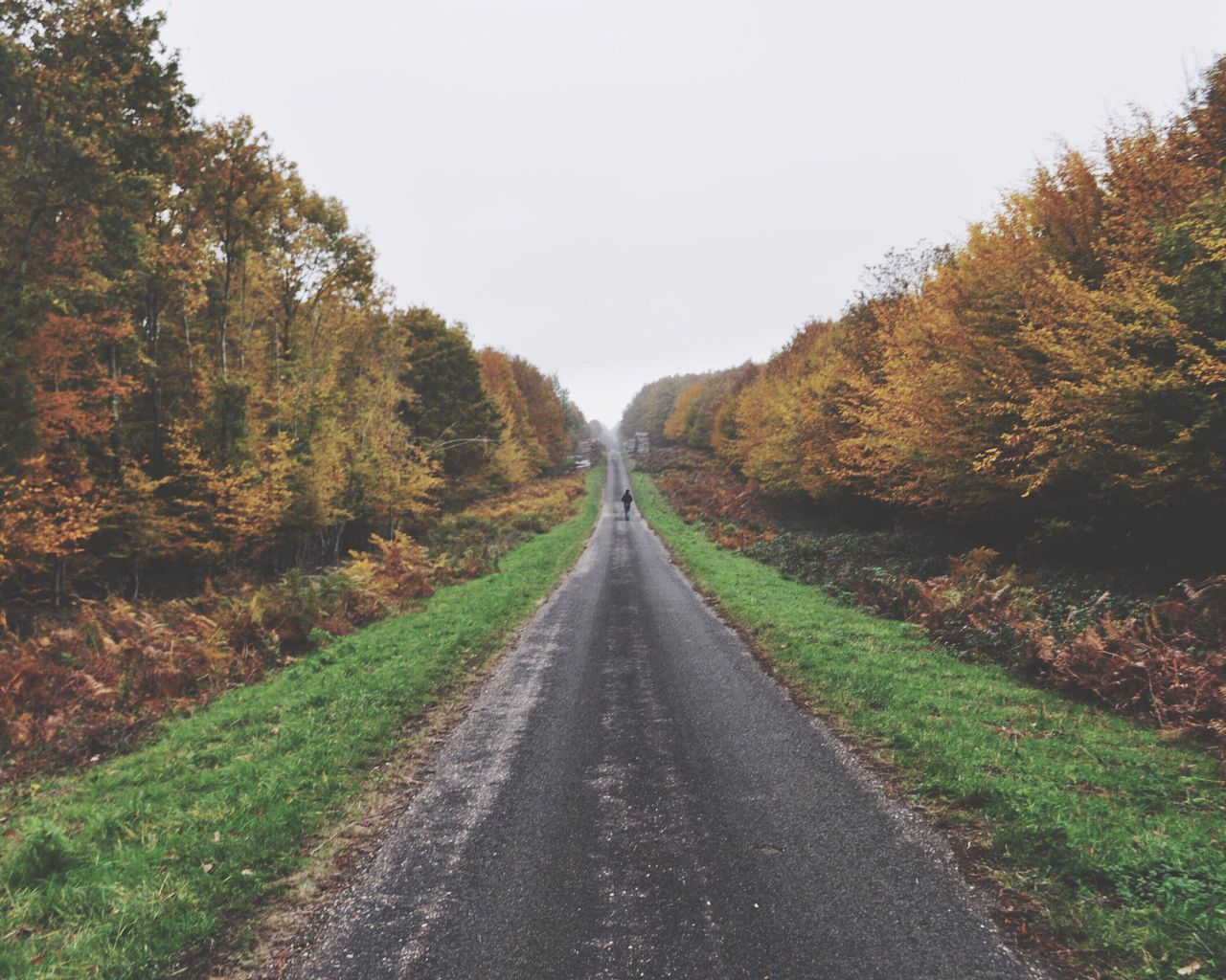 Escape The Great Outdoors – 2016 EyeEm Awards Road Path Way Escaping Escape Nature Autumn Autumn Colors Freedom Open Edit Perspective Forest