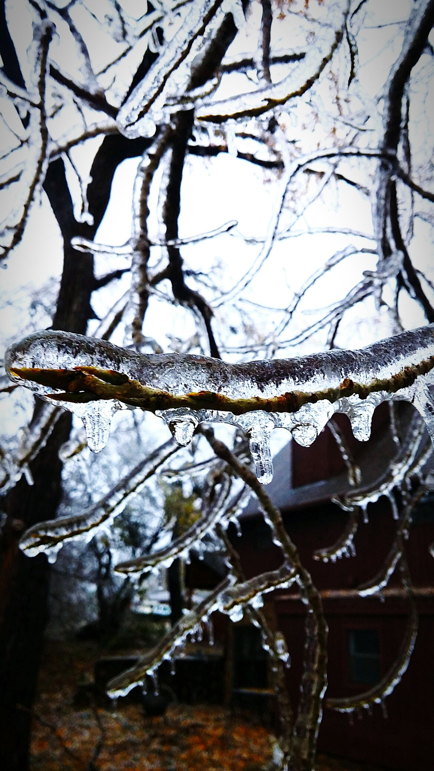 branch, bare tree, tree, winter, cold temperature, snow, season, nature, focus on foreground, close-up, frozen, day, outdoors, no people, weather, twig, tree trunk, hanging, low angle view, built structure