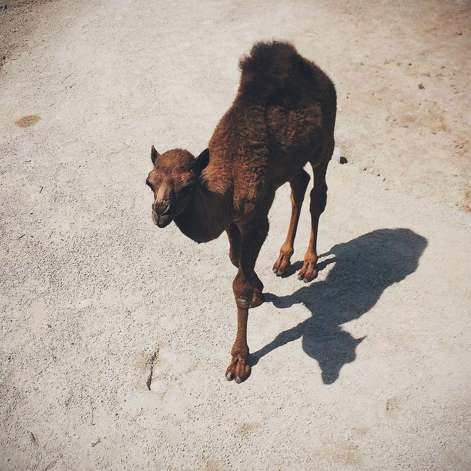 Beautiful stock photos of cute, Animal Themes, Apple Valley, Arid, Brown