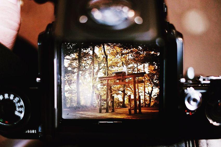 Film Film Photography Filmcamera Filmisnotdead Analogue Photography Analog Pentax 67 6x7 PENTAX67 Waistlevelfinder Viewfinder Finder Finderskeepers Finders Japan Japan Architecture Shrine Torii Gate Forest Fujifilm
