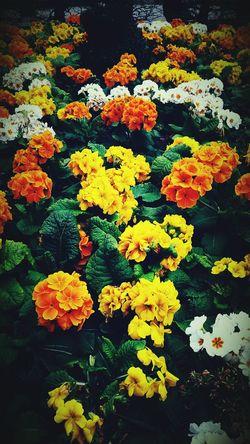 Flowers Yallow Photography Bestone Beautiful Nature