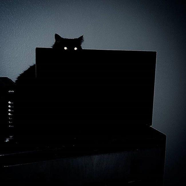 Petertheblackcat Iwilleatyoursoul Demoncat BLackCat Creepin