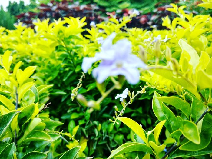 Nature Plant Beauty In Nature Leaf Greenery Close-up Freshness Fragile And Delicate Beautiful