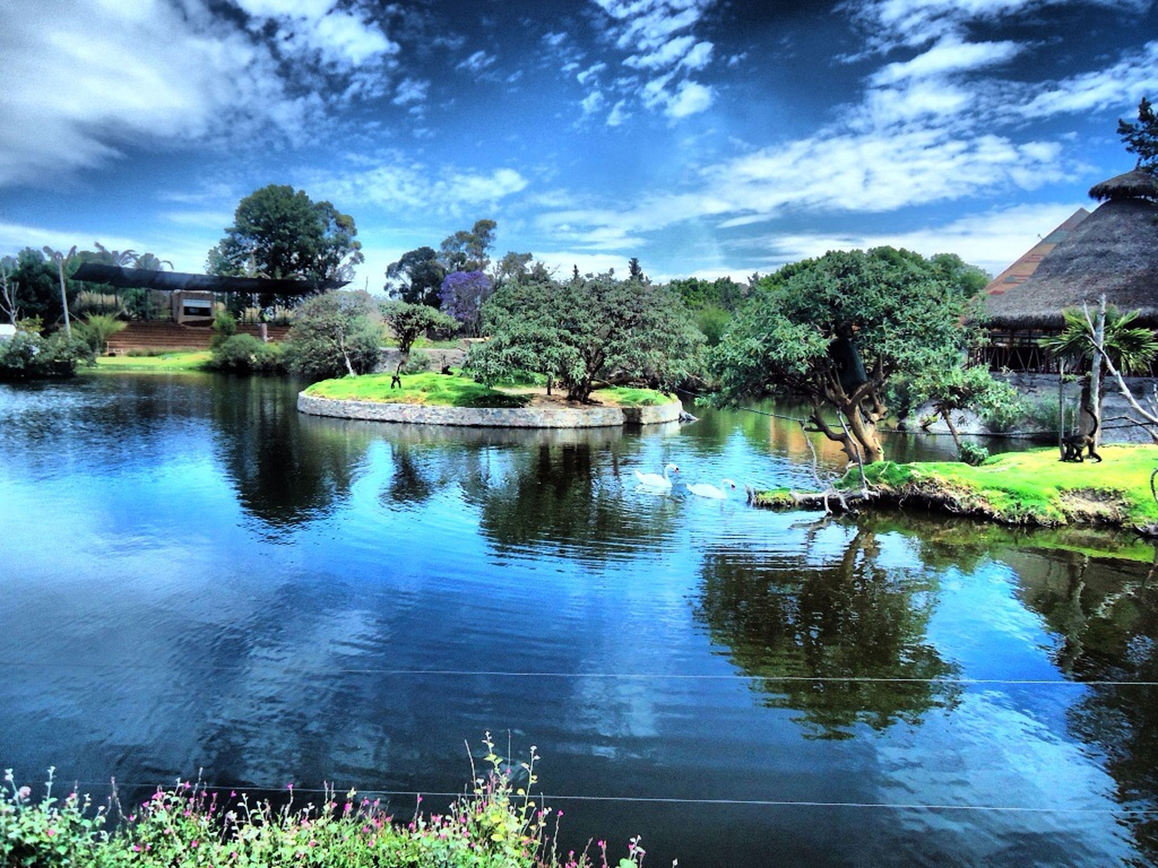 tree, water, sky, reflection, building exterior, architecture, built structure, lake, cloud - sky, cloud, green color, growth, tranquility, tranquil scene, nature, pond, house, beauty in nature, scenics, river