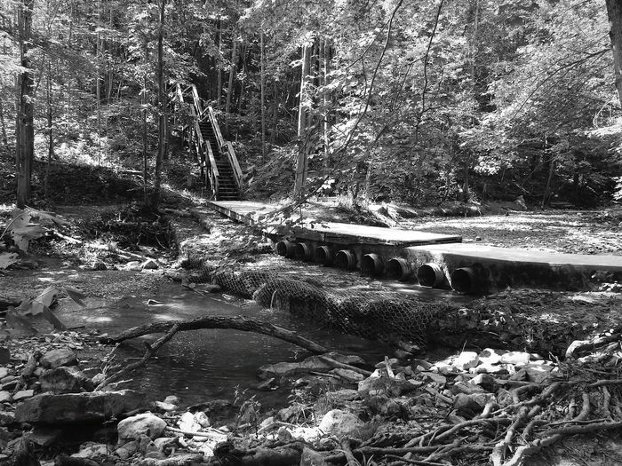 Base Camp ~ Water Outdoors Nature No People Tree Day Forest Beauty In Nature The Week On Eyem Beauty In Nature Tree Blackandwhite Photography Dappled Morning Light Through The Trees Living Free And Wild 😜 Hiking Adventures Peace And Quiet Forestwalk Creekbed Walkingbridge Manmade Structure Causeway Running Water Steps And Staircases Wire Mesh Exposed Roots