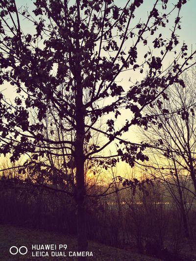 Tramonto sul fiume Fiume Brembo Tramontoacolori Sunset Tree Nature No People Beauty In Nature Passeggiata Outdoors Sky Nature_collection Spettacolonaturale Sun