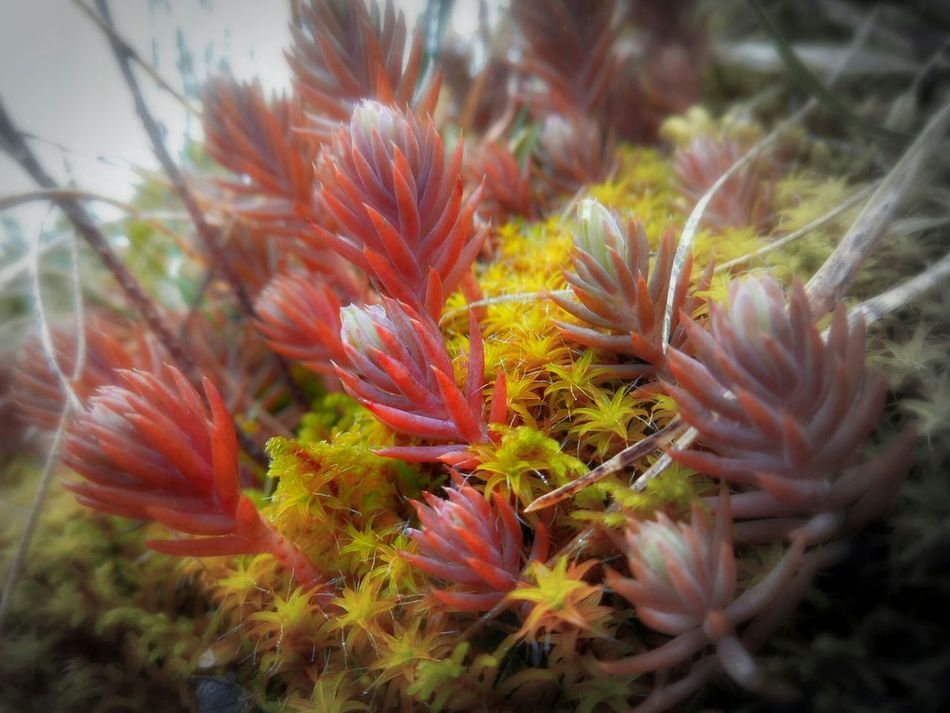 Moss flowers, Getting Inspired by Nature_perfection during a A Walk On The Hills
