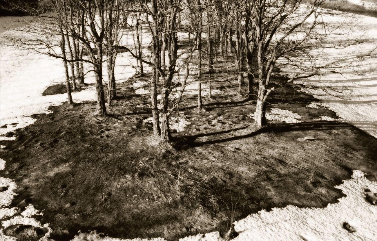 Erosion Photo Photography Dead Tree Tree Winter Snow 枯れ木 雪 雪解け 昼 冬