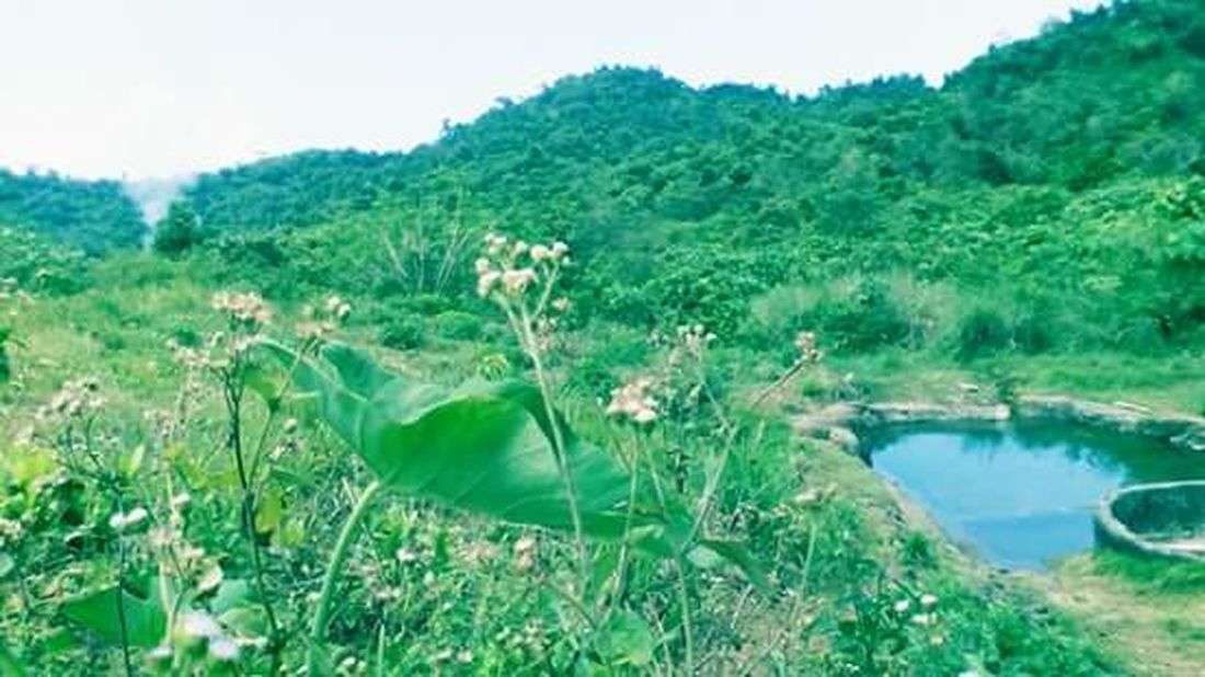 Green Color Nature Photography Nature_collection Naturelovers Nature_perfection Tree Scenics Landscape Mobilephotography Mobile Capture...... Falls Above At Sta Ana Cagayan,Philippines