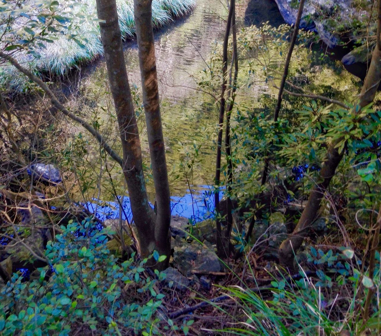Creekside Trail Early Morning Nature Forest Growth Grass 🇯🇵 Japan Tranquility Outdoors Beauty In Nature No People Day