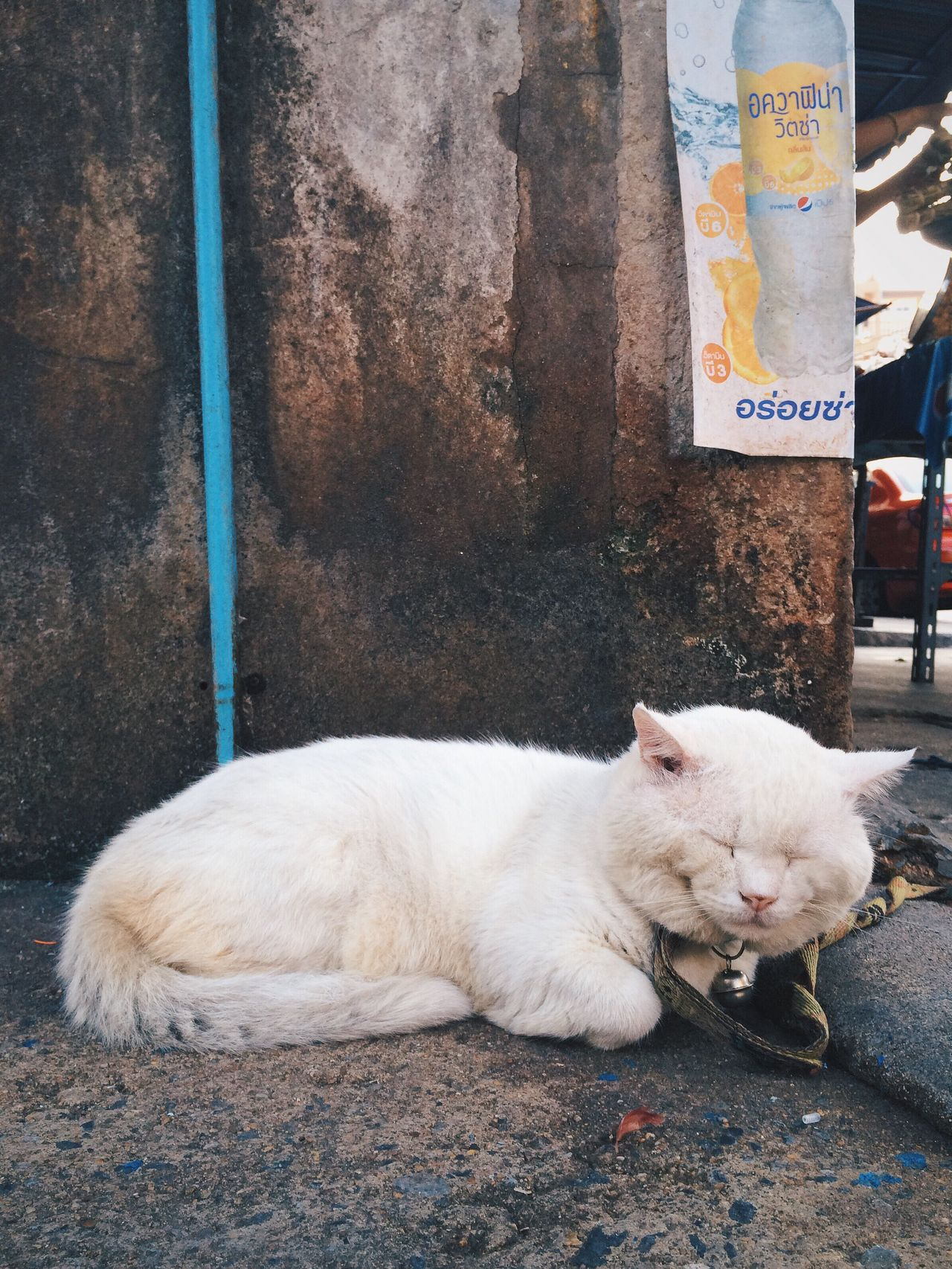 EyeEmNewHere Domestic Animals Animal Themes Mammal One Animal Livestock Pets Day Outdoors Cat White Sleepy Sleep Sitting Lazy Day Relaxing Nap Outdoor Ground Vintage Cute Chat