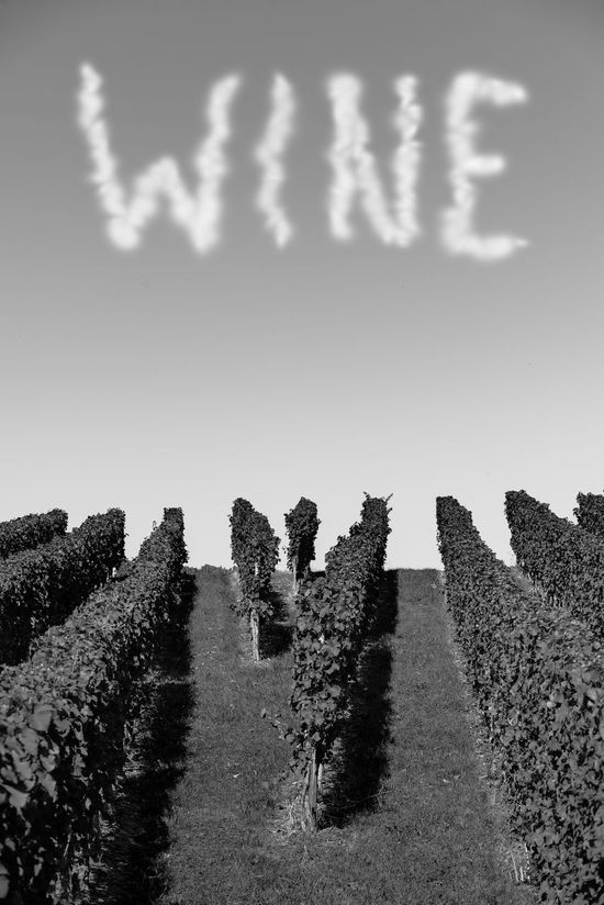 Word wine as clouds in the sky over a green vineyard Agriculture Green Plants Skyline Vines Wine Tasting Words Matter, Too Beauty In Nature Clouds And Sky Field Grass Landscape Nature No People Outdoors Sky Summer Text Tranquility Vertical Format Vineyards In Autumn