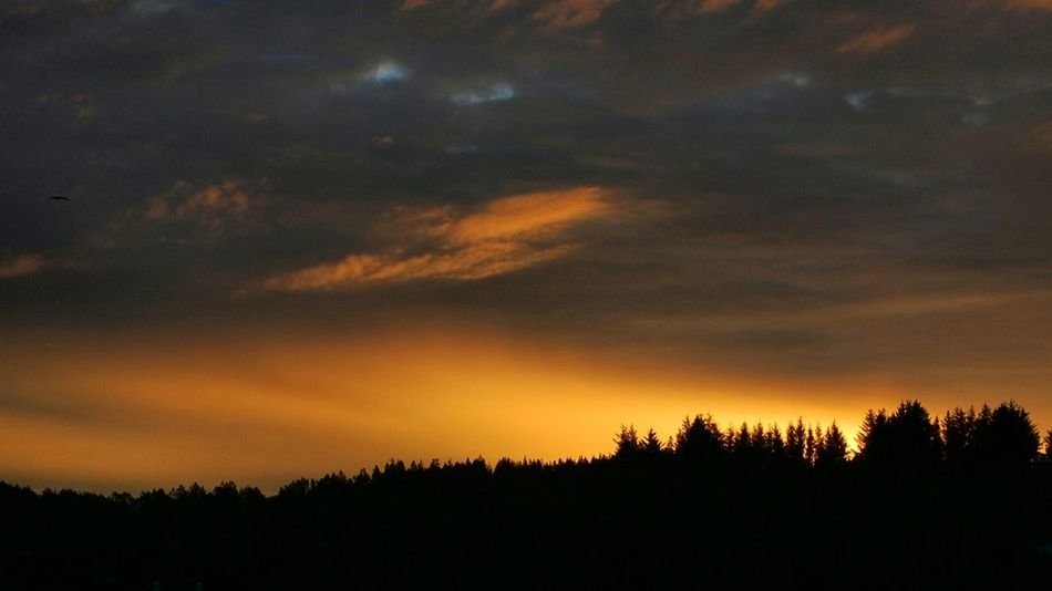 Tree Nature Forest Beauty In Nature Sky Landscape Outdoors No People Tree Area Mountain Sun Sol Perfect Sky Sotra Norge Norway Cloud - Sky Dramatic Sky Beauty In Nature Nature Hordaland Sunrise Sunrise Colors Sunriselover