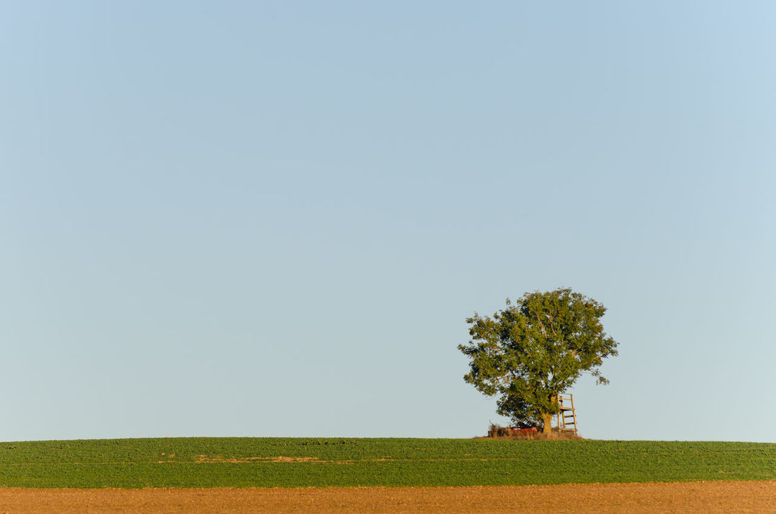 Beauty In Nature Clear Sky Day Field Grass Growth Landscape Lone Nature No People Outdoors Scenics Tranquil Scene Tranquility Tree