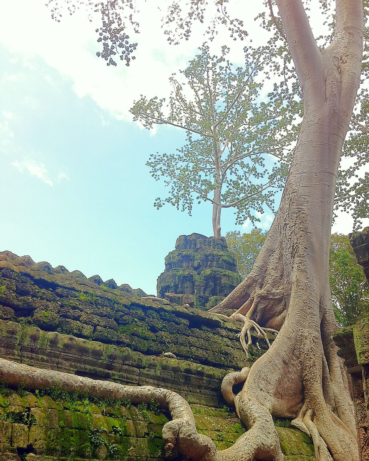 Cambodia, Angkor Thom (2012) Cambodia Angkor Tree Ancient Growth No People Nature Beauty In Nature Agriculture Outdoors Day Sky Scenics Landscape EyeEmNewHere Travel Destinations Tourism Angkor Thom Hello World History EyeEmNewHere