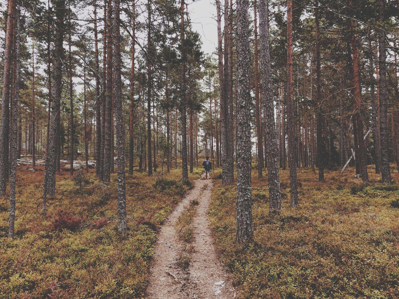 Forest pt. 2 Vscocam Travelphotography Sweden Forest