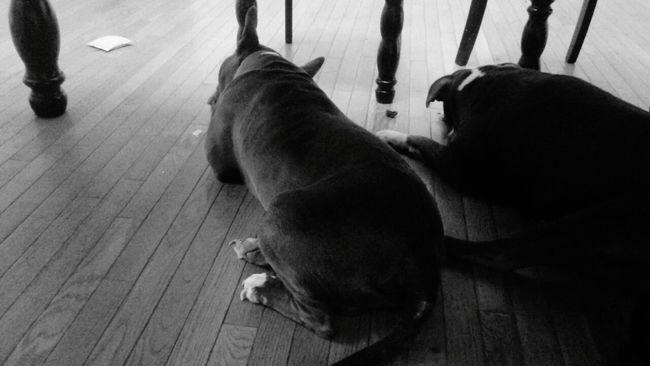 Dogs Of EyeEm Underthetable Dogslife