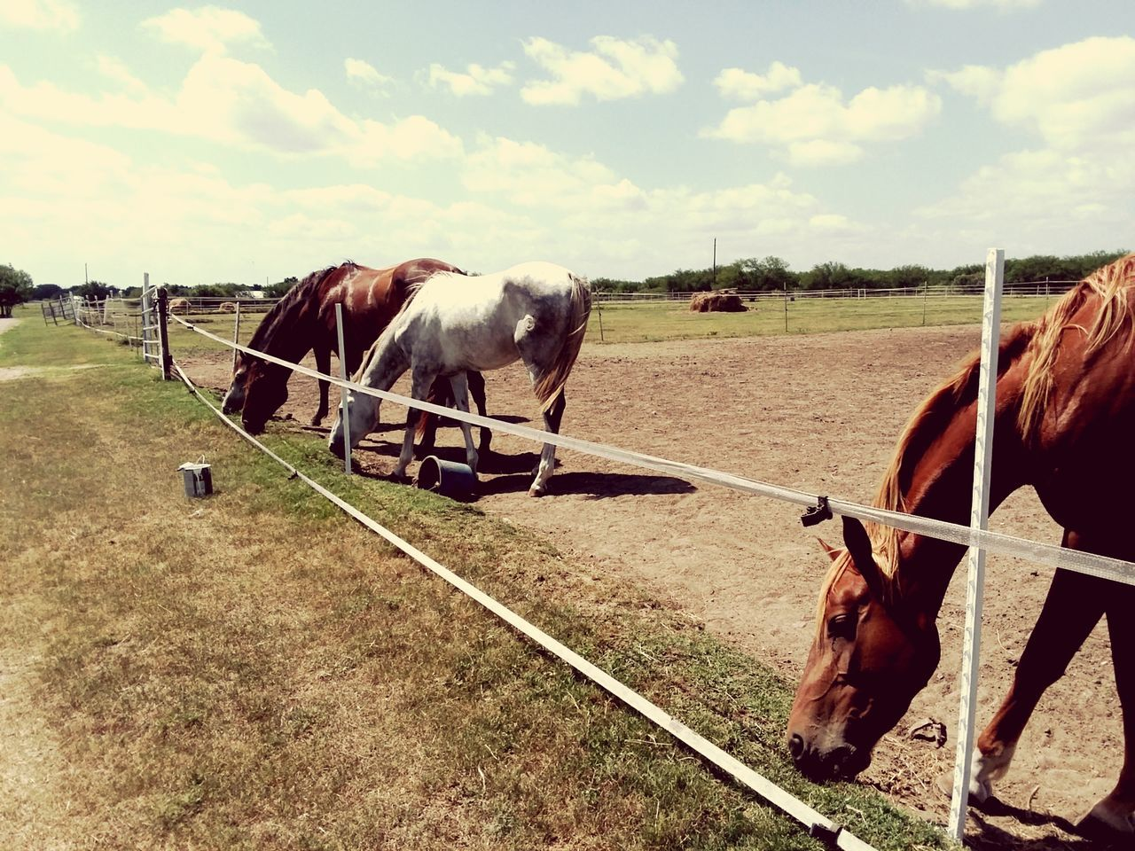 EyeEm Selects Horse Domestic Animals Livestock Animal Agriculture Mammal Animal Themes One Animal Paddock Field Brown Rural Scene Grazing Day Sky No People Outdoors Nature Oil Pump