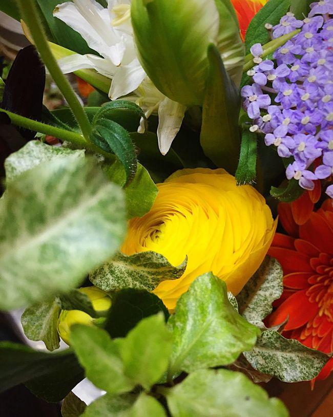 花繭 Japan Hello World Relaxing Taking Photos Enjoying Life White Purple Flower Leaf Shadow Orange Gerbera Lovely Beautiful Nature Energy Power Yellow Green 花 花束 繭 Cocoon