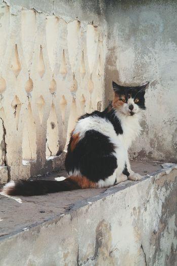 Cat Visitor Portrait Animal NX2000 Tunisia Look