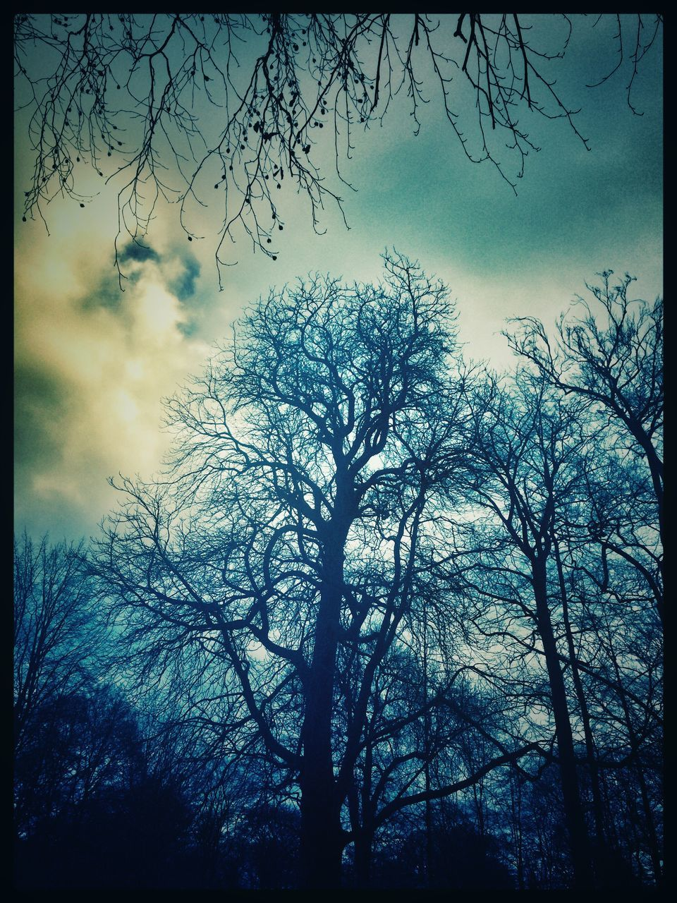 tree, nature, forest, silhouette, sky, tranquility, low angle view, no people, beauty in nature, tranquil scene, outdoors, branch, day, bare tree, growth