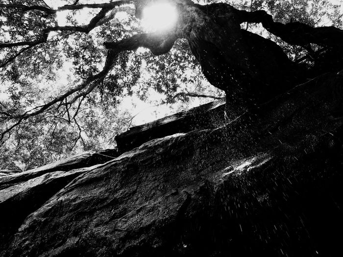 Rain, rain, go away. Waterfall Raindrops Sydney Tree Nature Beauty In Nature No People Low Angle View Outdoors Day Tranquility Sky Peaceful Peace Blackandwhite Sun Black & White IPhoneography First Eyeem Photo FirstEyeEmPic EyeEmNewHere