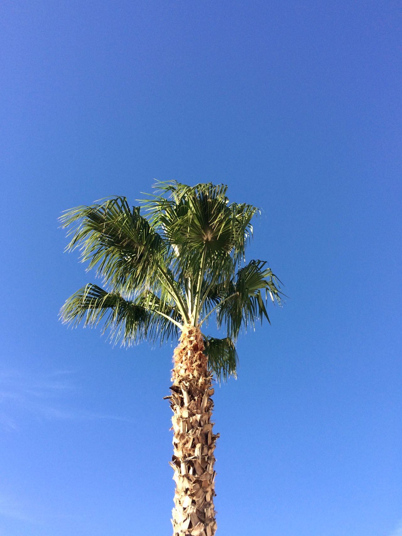 Los Cabos Mexico Check This Out Blue Sky
