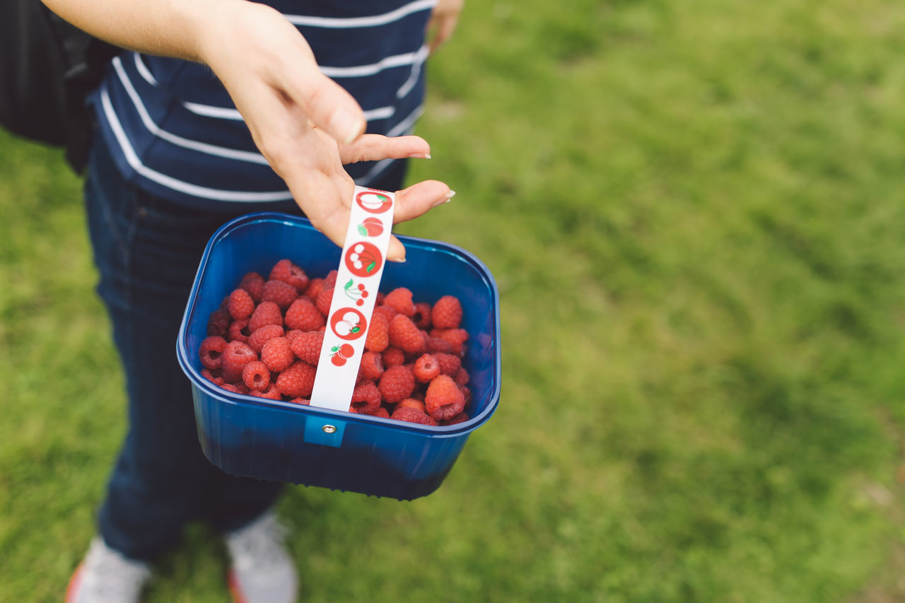 Basket Close-up Cropped Day Farm Focus On Foreground Grass Green Color Holding Human Finger Leisure Activity Lifestyles Multi Colored Outdoors Part Of Person Pick Your Own Fruit Raspberries Raspberry Selective Focus Unrecognizable Person