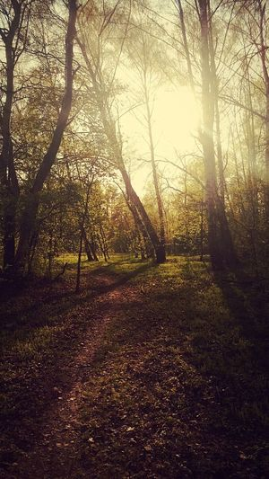 Forest Nature Beauty In Nature No People Sunlight