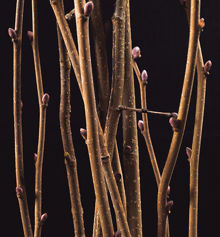 Hazelnut Twigs Beauty In Nature Branch Catkin Close-up Day Flower Fragility Growth Nature No People Outdoors Twig