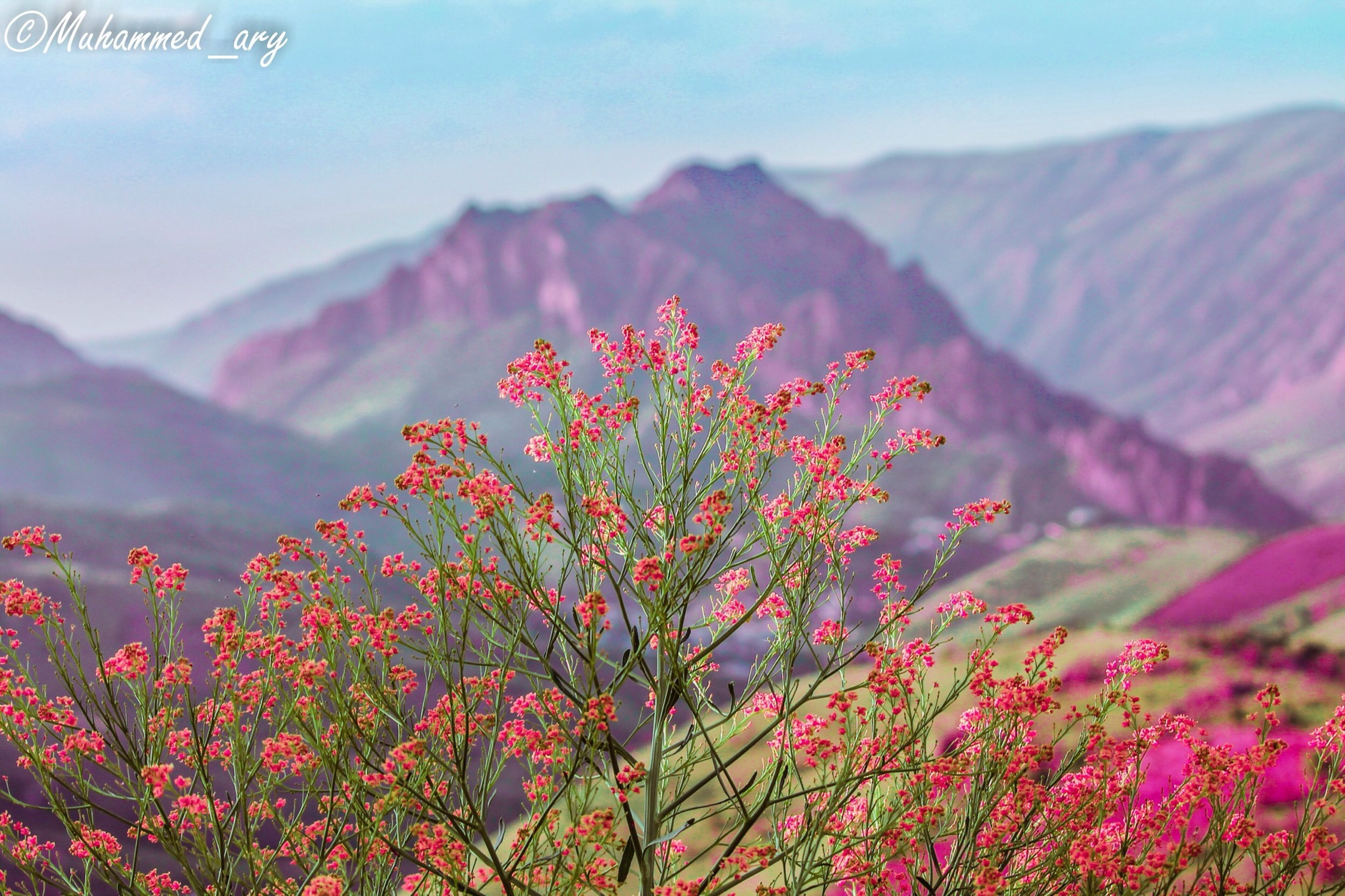 flower, beauty in nature, growth, nature, red, freshness, tree, branch, fragility, focus on foreground, tranquility, plant, close-up, scenics, pink color, outdoors, day, season, low angle view, no people