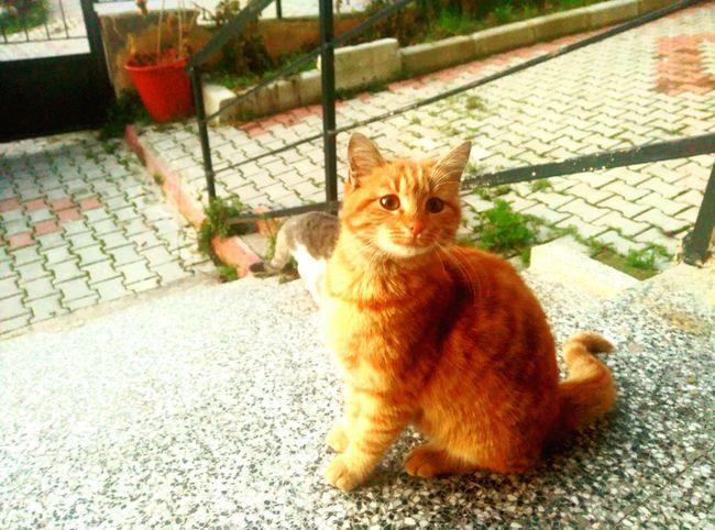 Cat Blondie